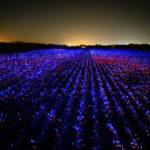 """""""Grow"""", il progetto del Roosegaarde Studio: arte e scienza per un'agricoltura più sostenibile"""