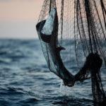 Greenpeace contro la pesca intensiva che mette in ginocchio l'ecosistema dell'Oceano Indiano