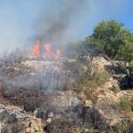Ancora roghi in Sicilia: la Regione tarda, gli attivisti lanciano una raccolta fondi