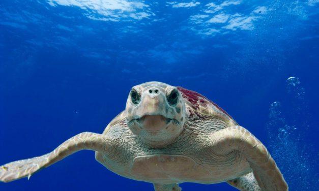 Nascono i Tartawatcher, i guardiani di Legambiente a difesa delle tartarughe marine