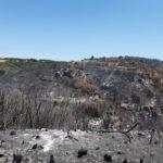 Il fuoco non dà tregua alla Sicilia e dalle istituzioni nessuna strategia: l'appello del MAI.