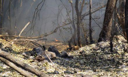 Roghi negli iblei: presentato in Procura un esposto-denuncia per disastro ambientale da incendio